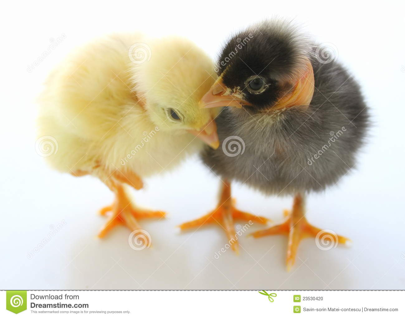 Two Little Easter Chickens