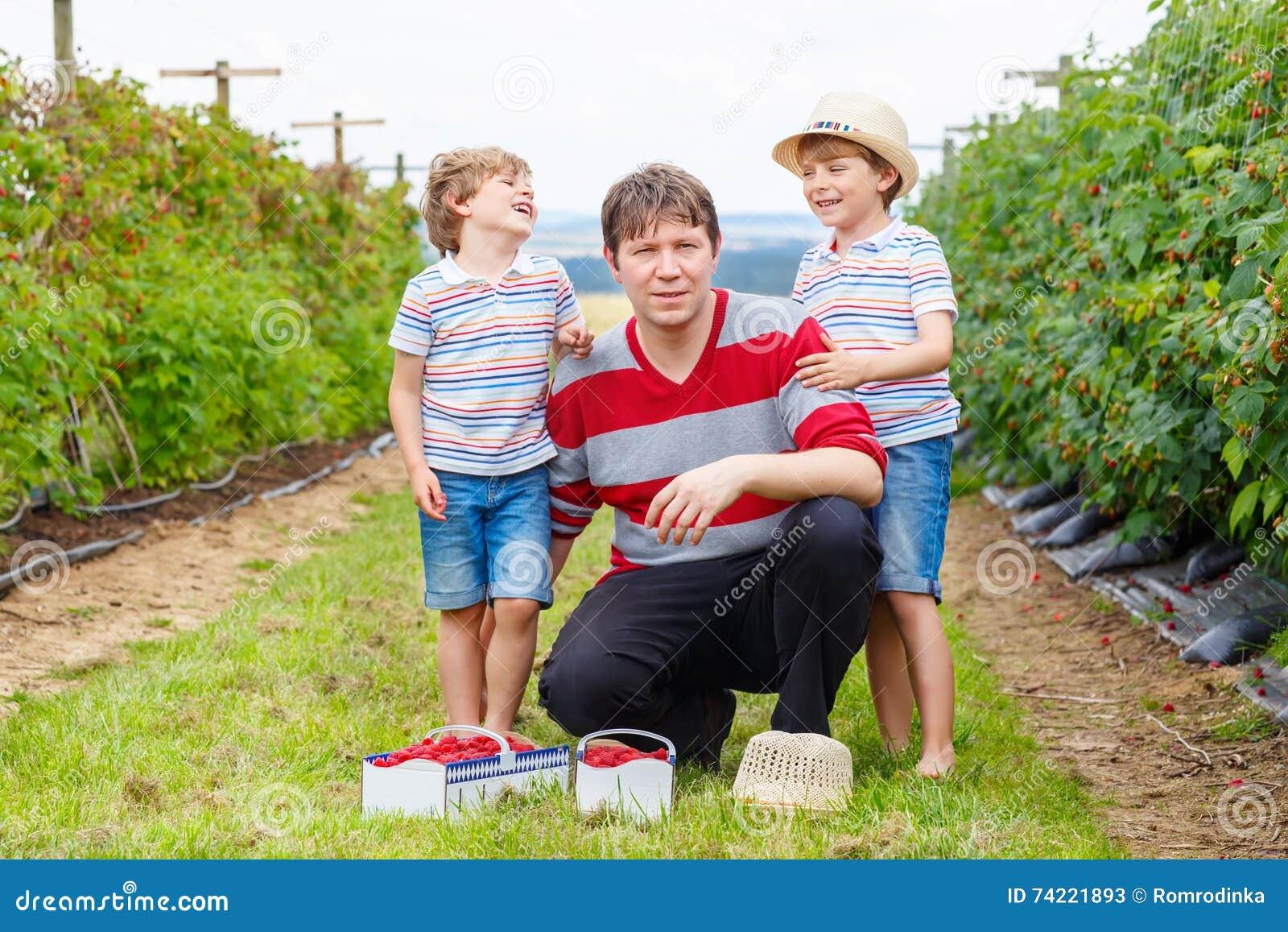 Two little kid boys and father having fun on raspberry farm
