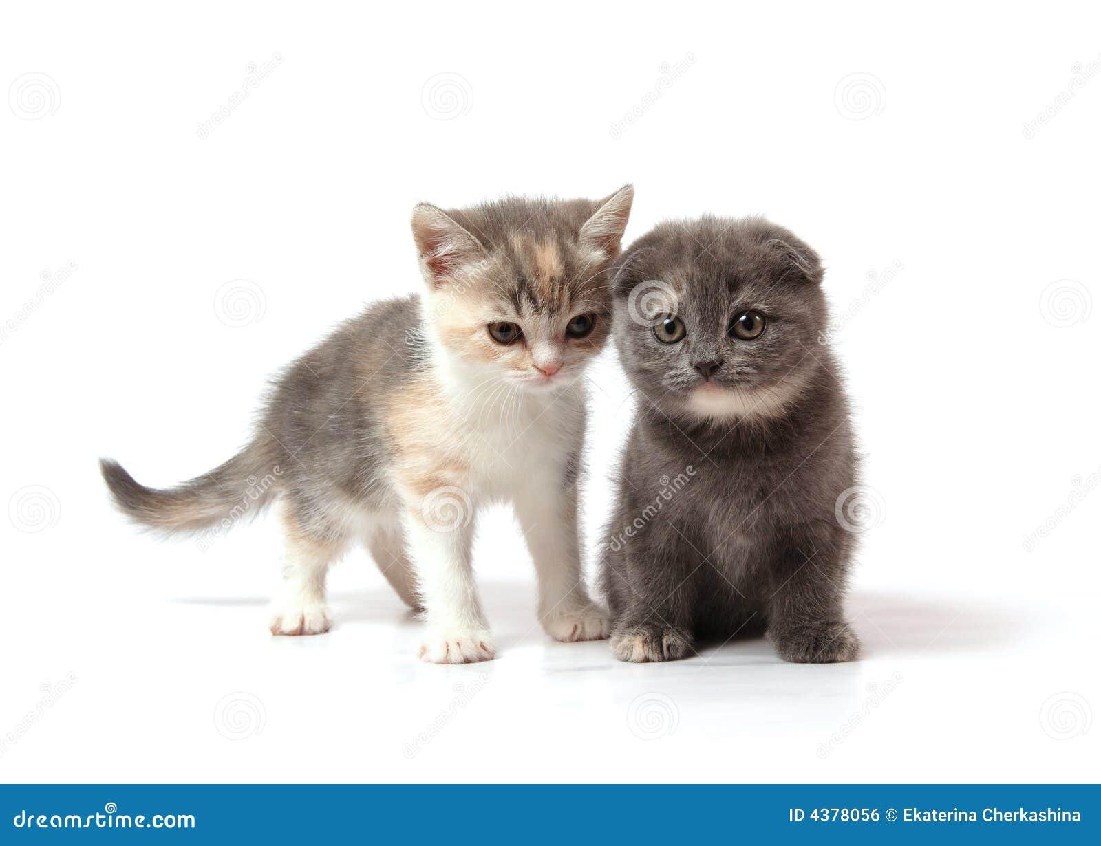 Kitten Clip Art Two little kittens sto...