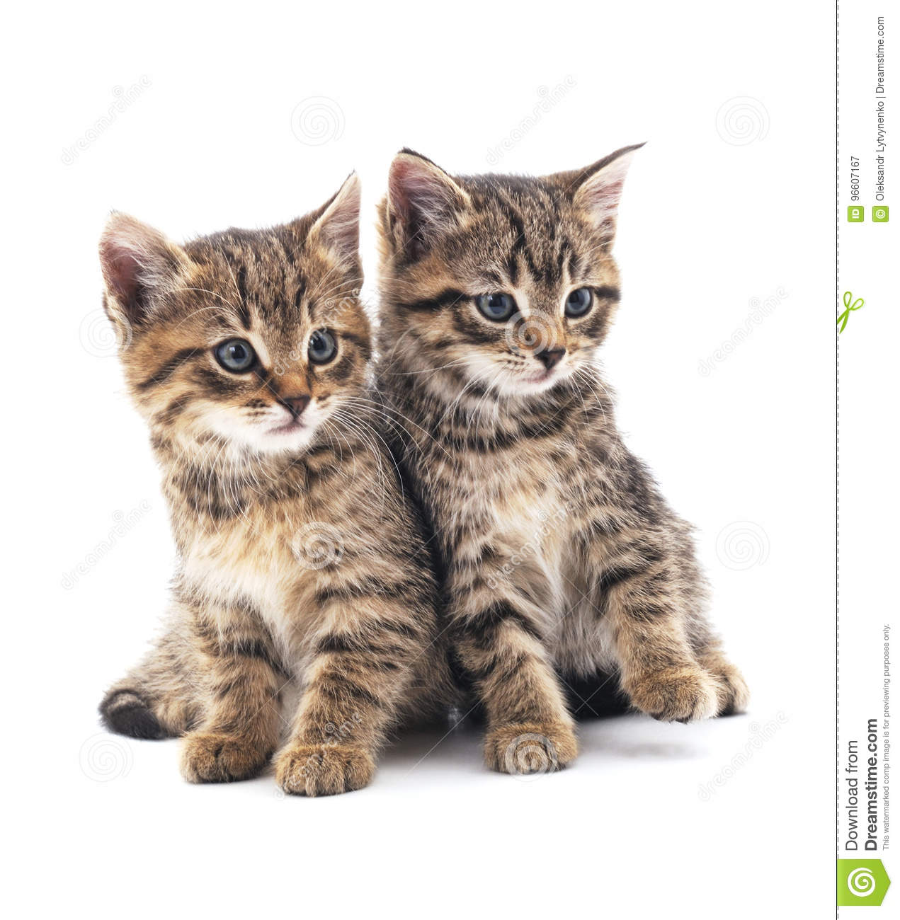 Download Two little kittens. stock image. Image of image, cats - 96607167
