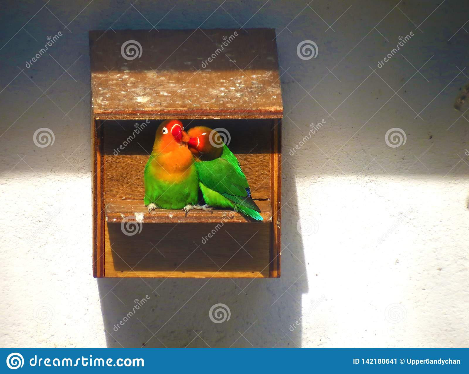 Two lovebirds enjoying each other`s company in the birdhouse