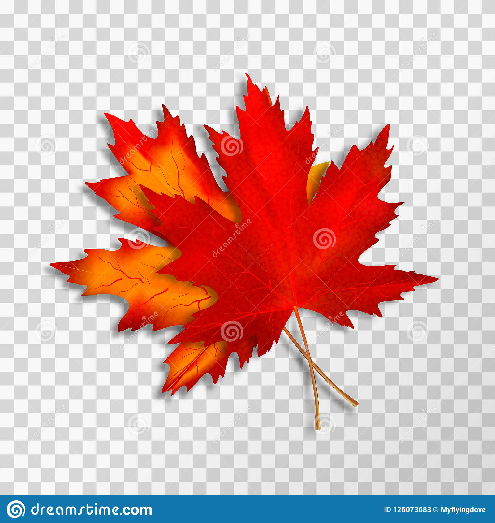 Two Maple Leaves Isolated On Transparent Background Bright Red Autumn Realistic Leaves Vector Illustration Eps 10 Stock Illustration Illustration Of Herbarium Leaves 126073683