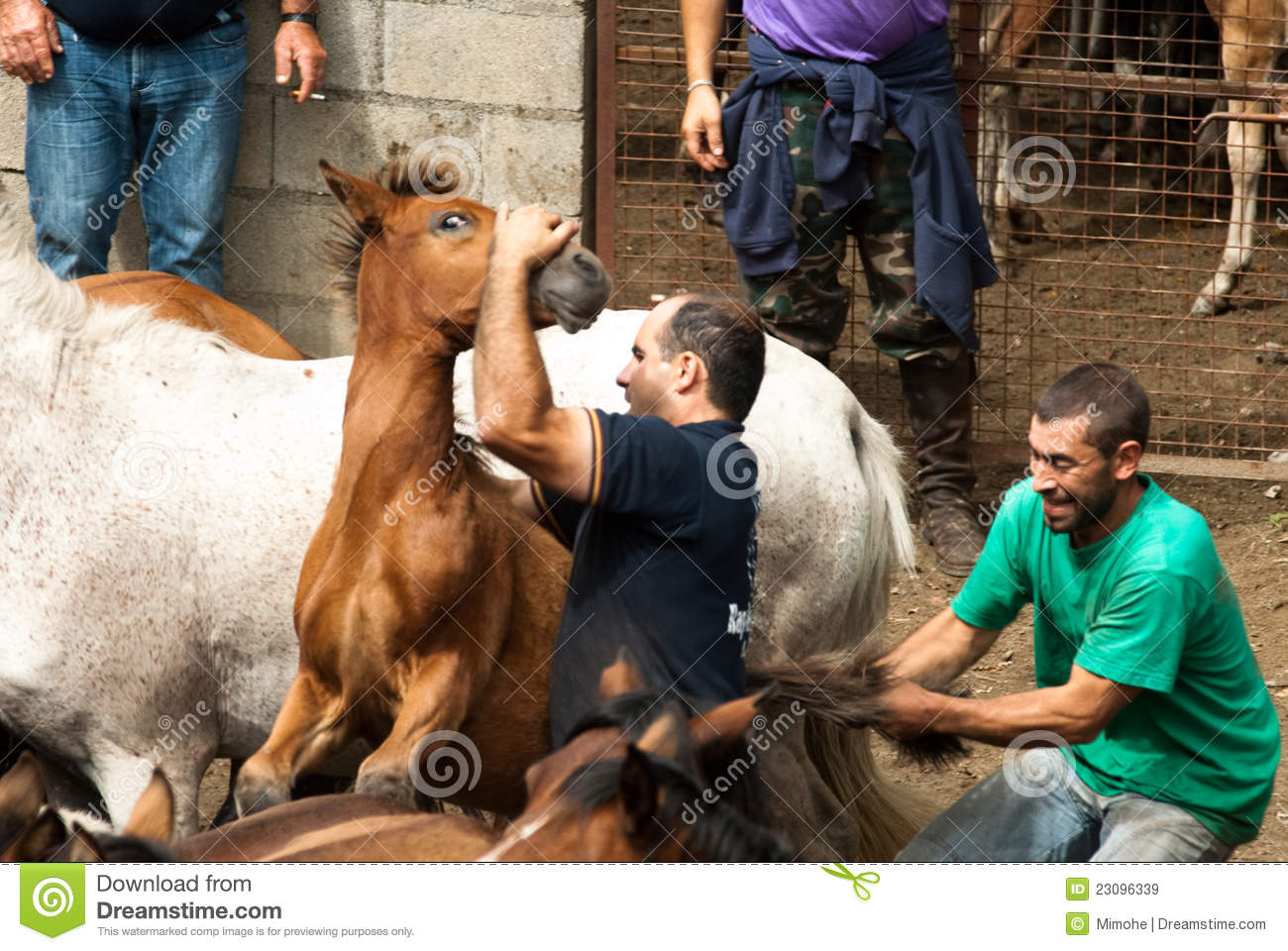 Two Men One Horse Stock Images