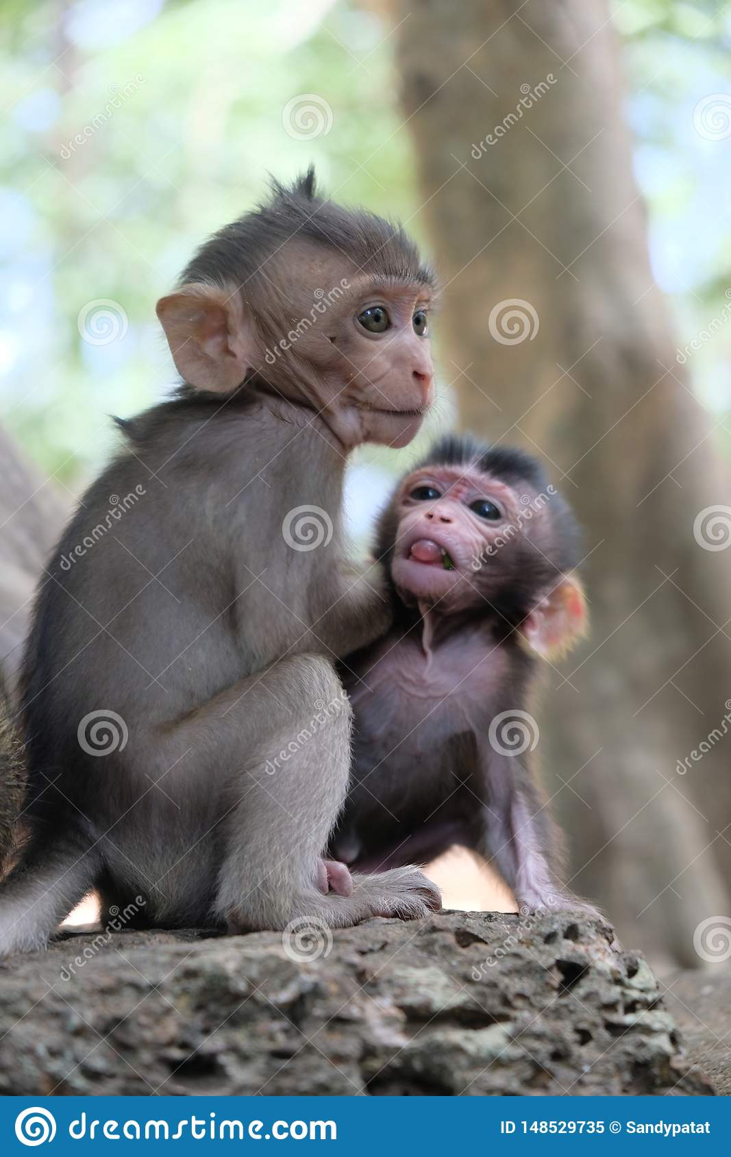 Two monkey babies in Angkor, Cambodia