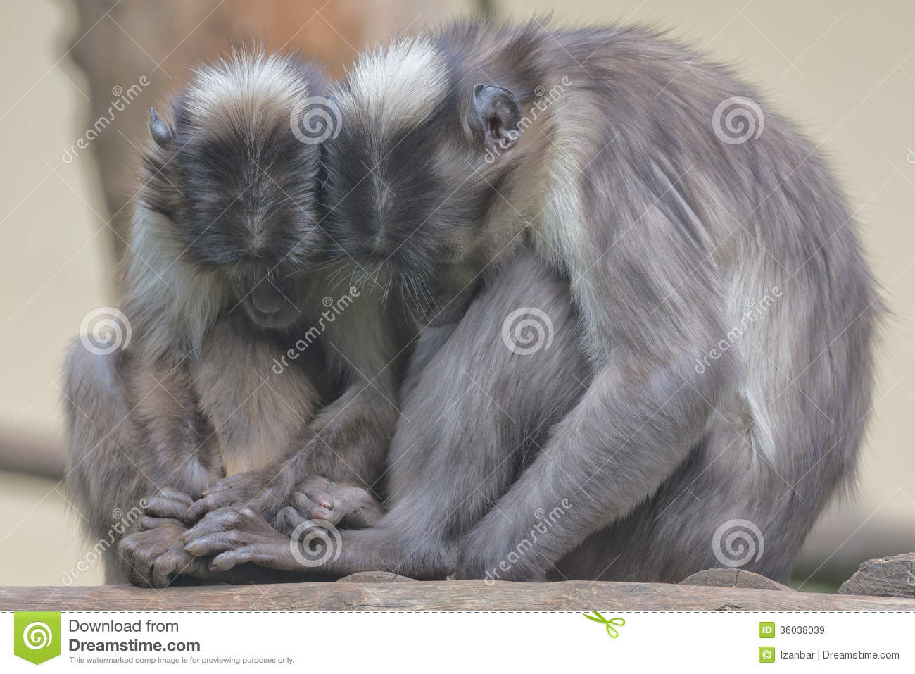 Two monkeys hugging drawing - photo#25