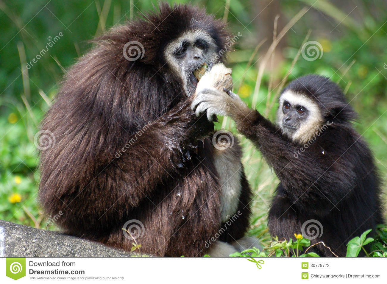 Two monkeys hoping to grab