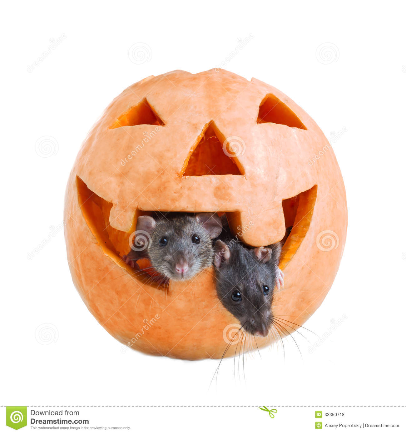 two mouse and pumpkin halloween stock photo - image of spooky