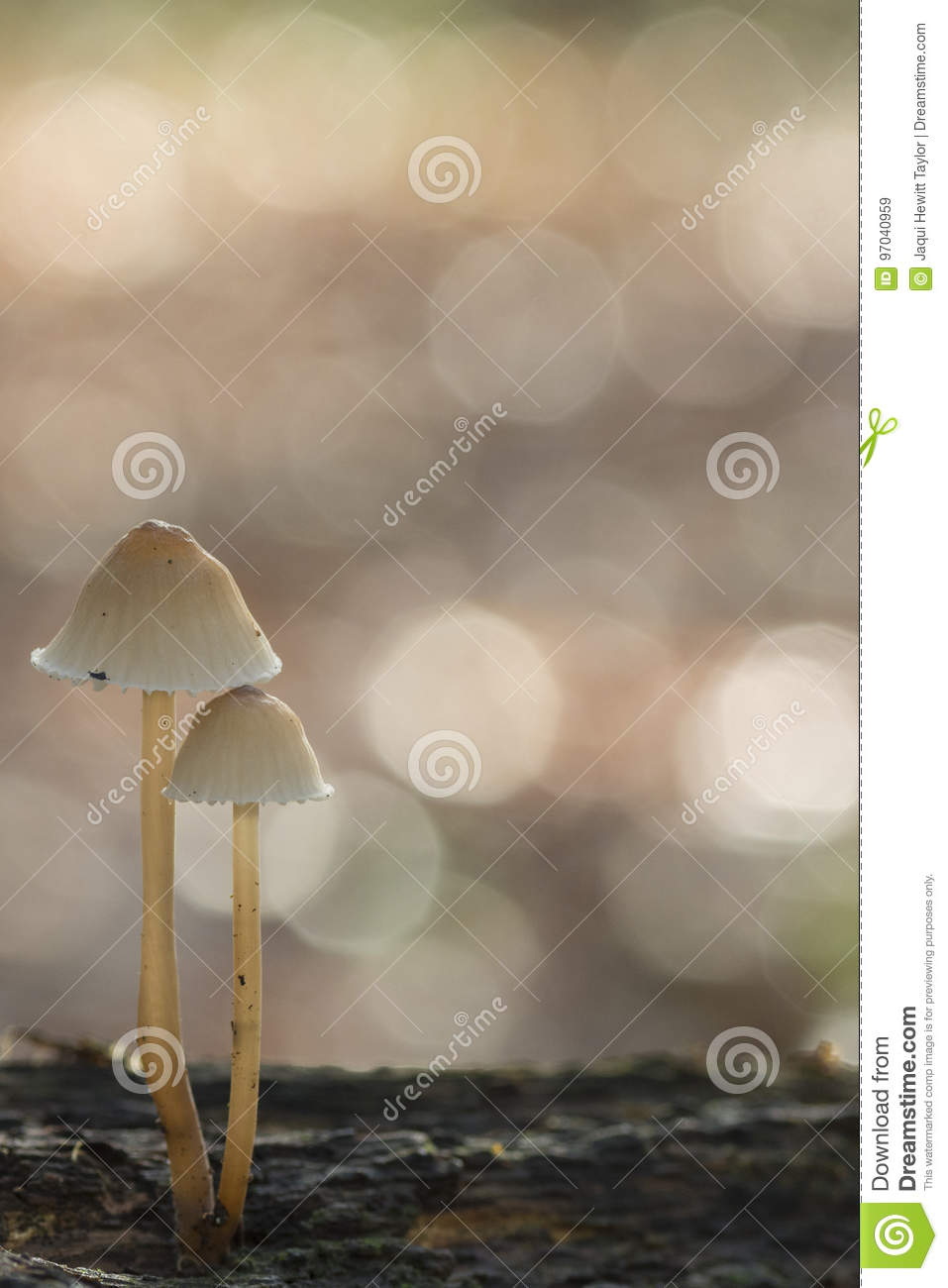 Two mushrooms on a log