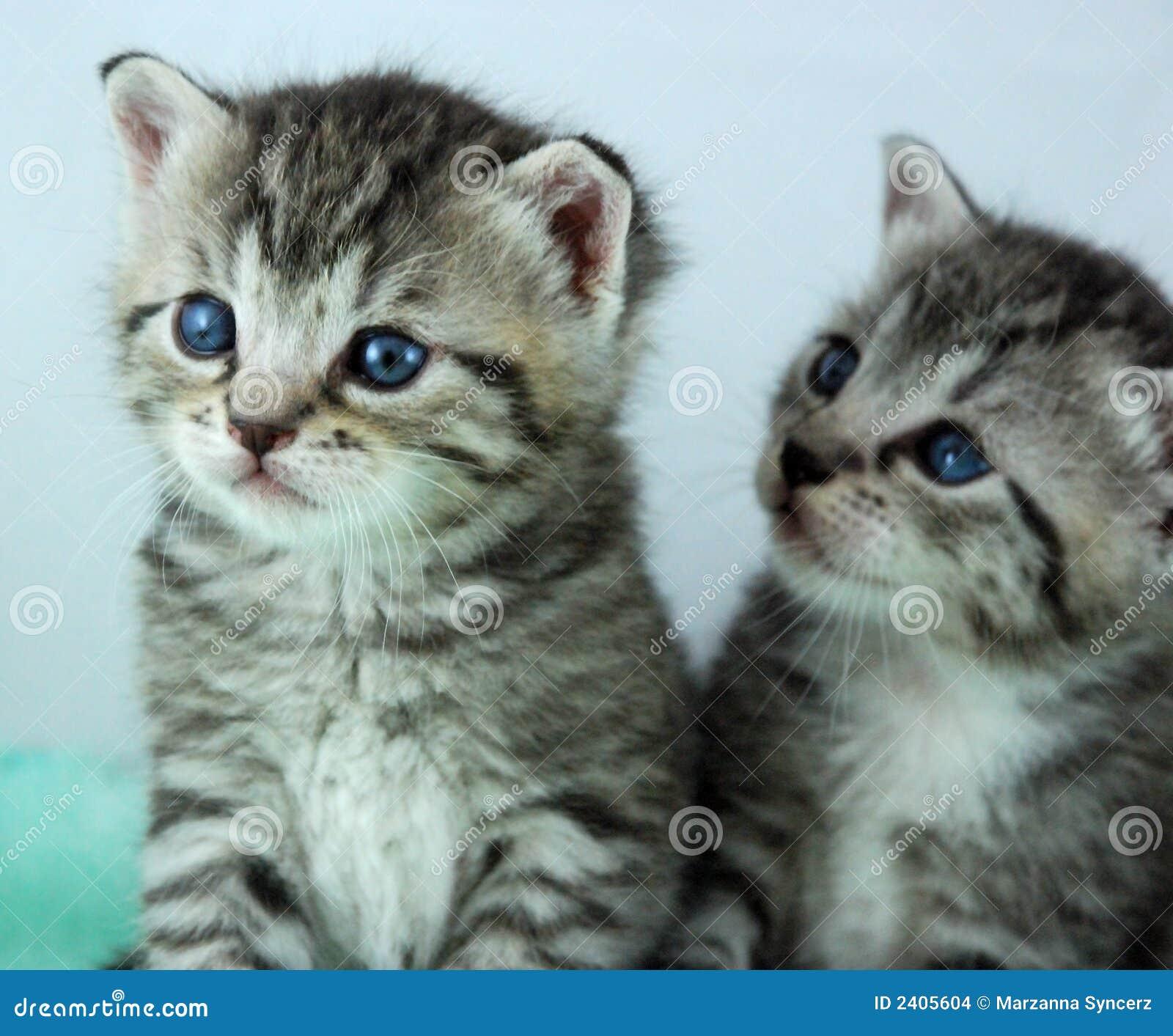 two newborn kittens stock images