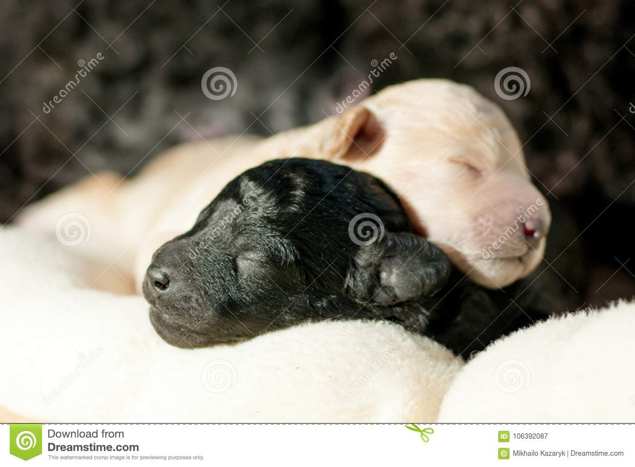 two newborn puppies together stock image image of lovely