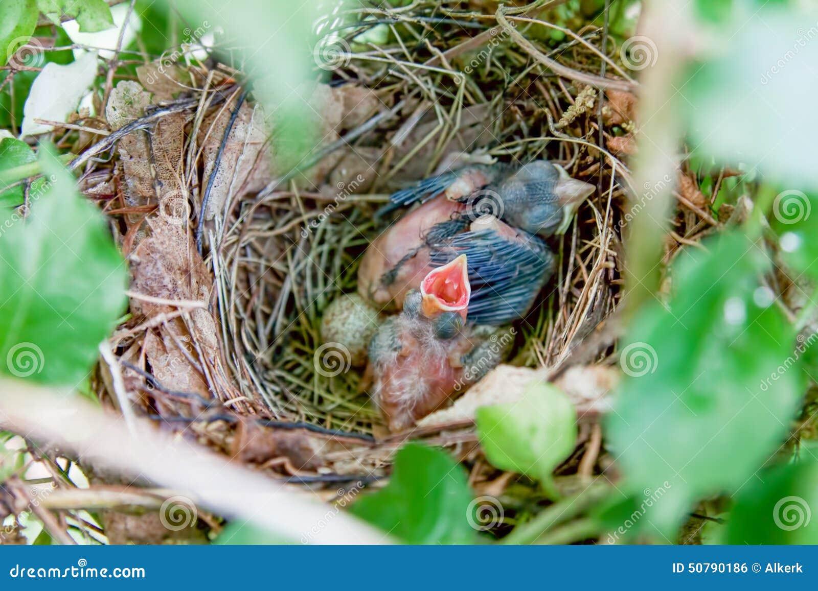 Baby Bird Egg Food