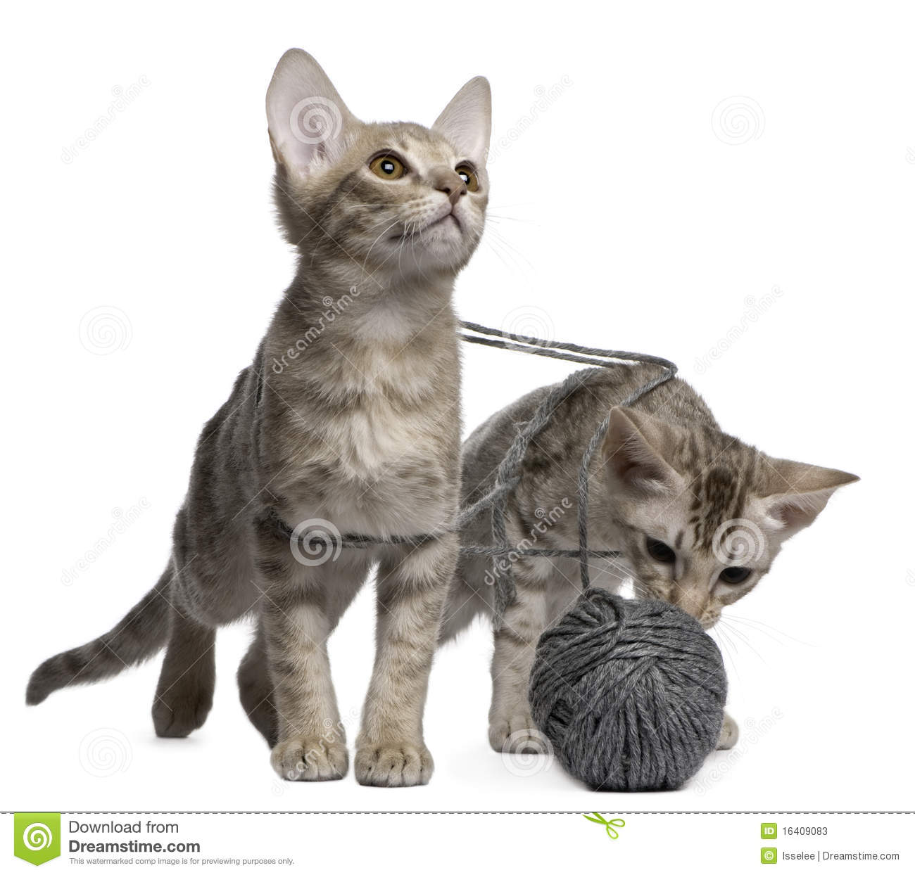 does dry cat food go bad