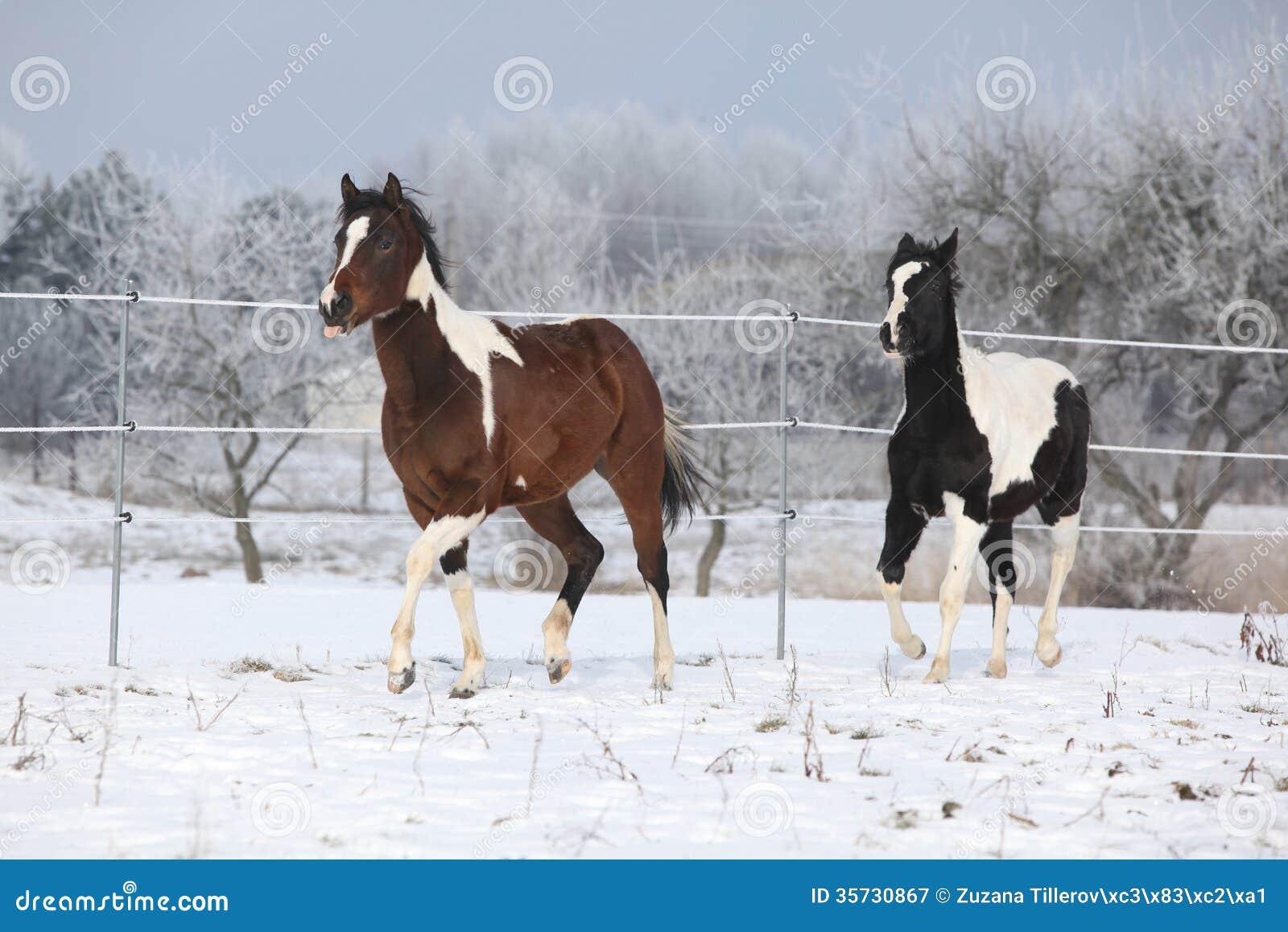 running horses wallpaper for desktop