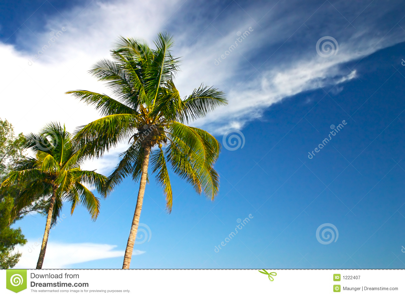 Two Palm trees and a blue sky