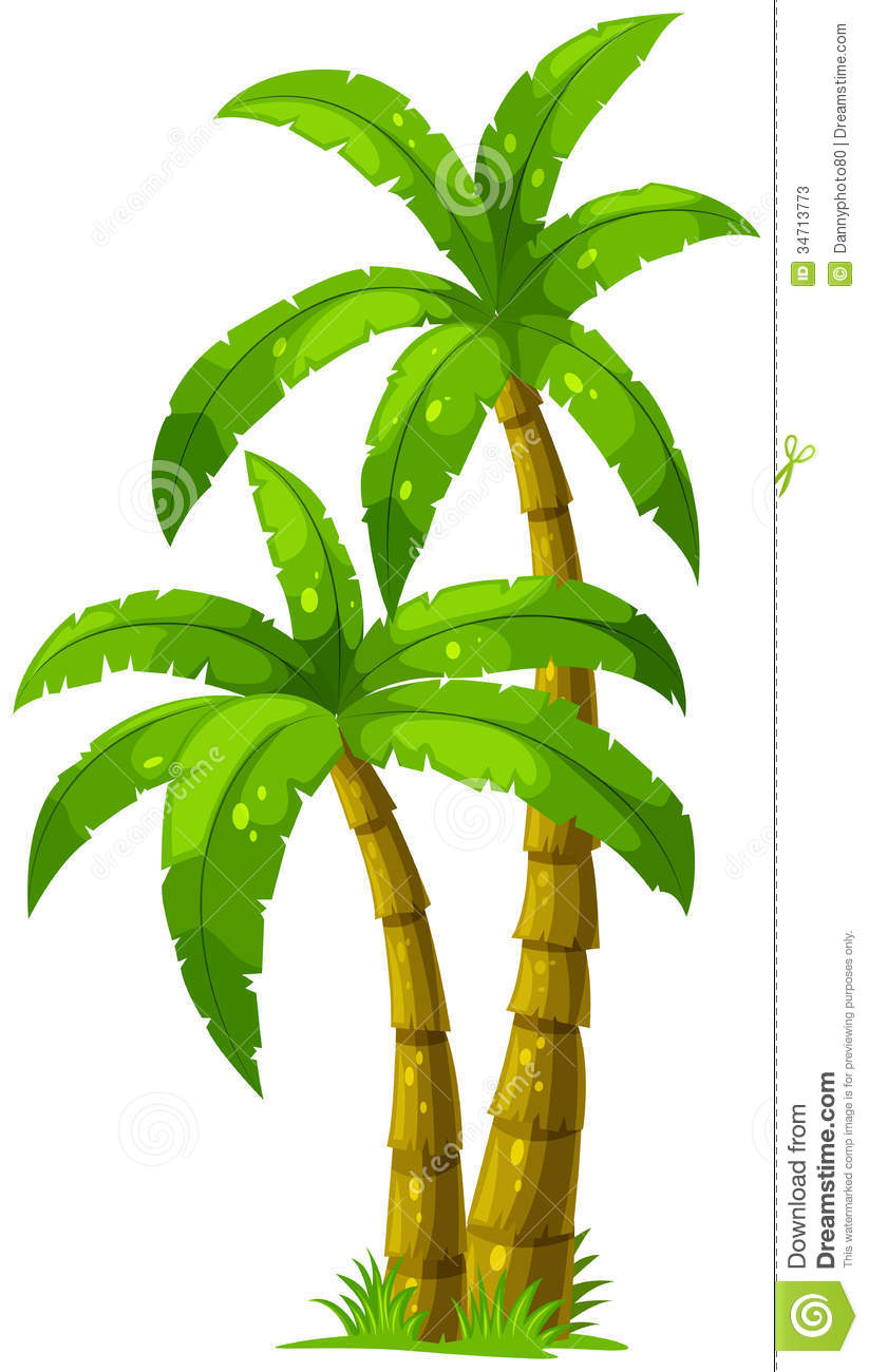 Illustration of the two palm trees on a white background.