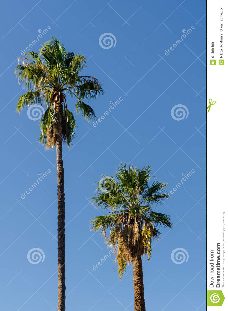 two palm trees stock photo image 61488400. Black Bedroom Furniture Sets. Home Design Ideas