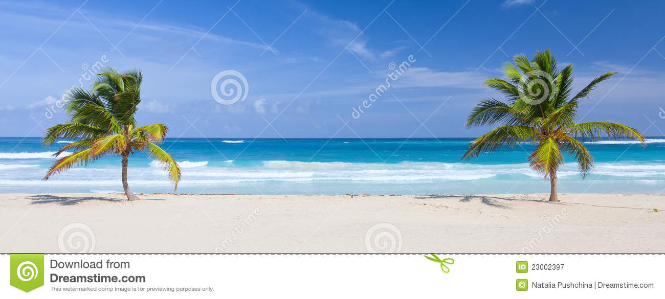 Two palm trees on the tropical beach