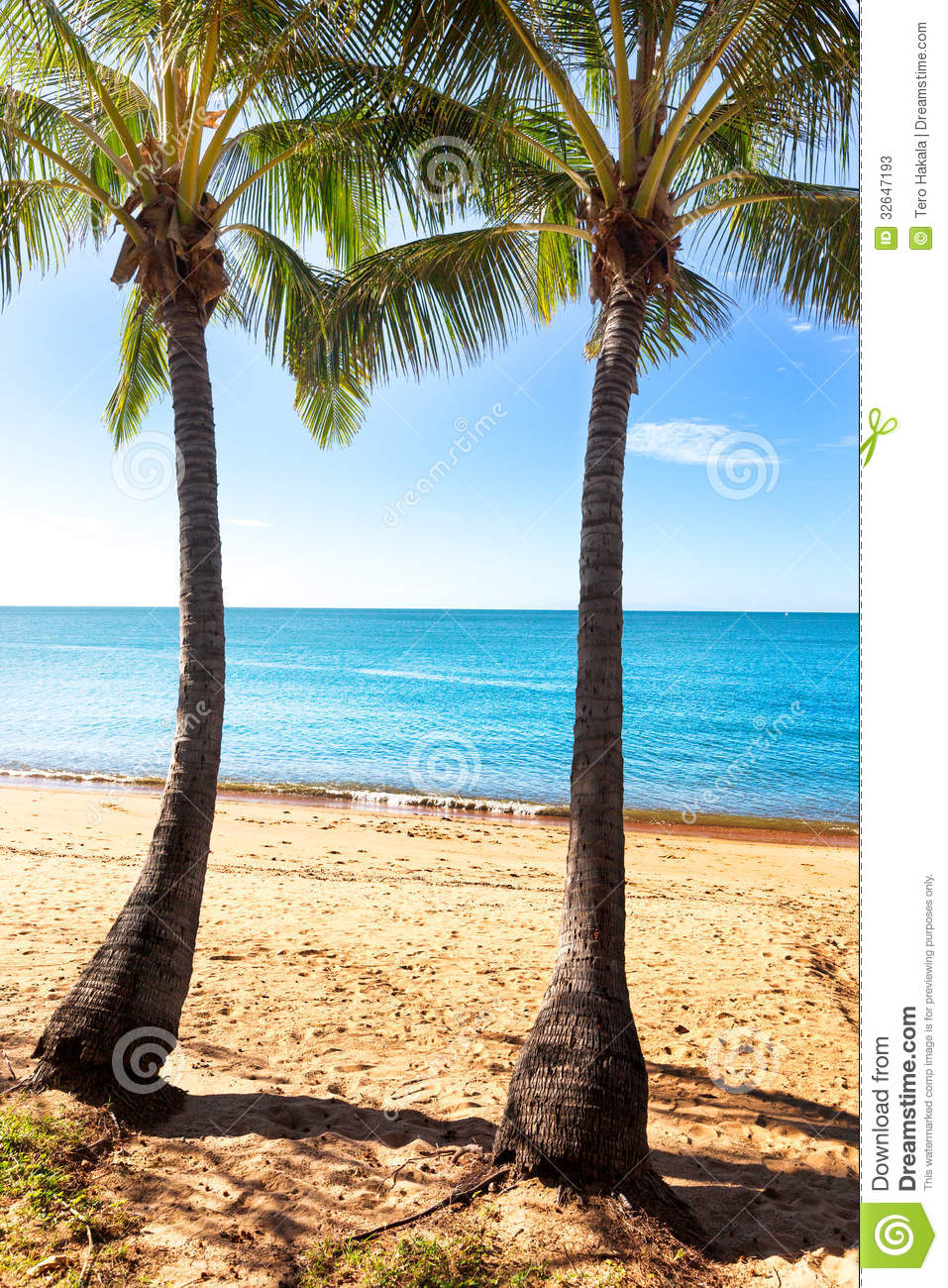 Two Palm Trees On Tropical Beach Stock Image