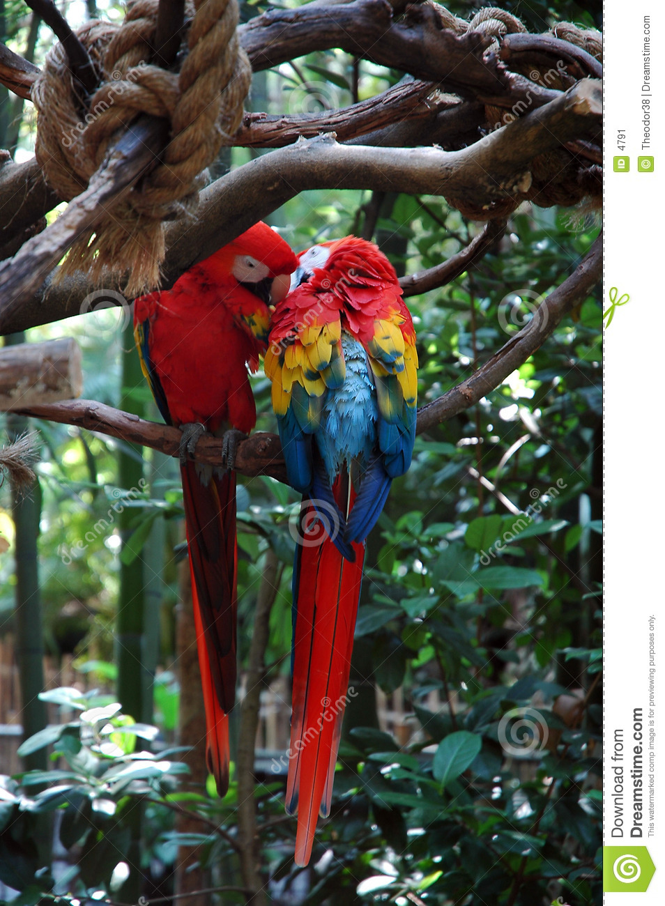 Two parrot love