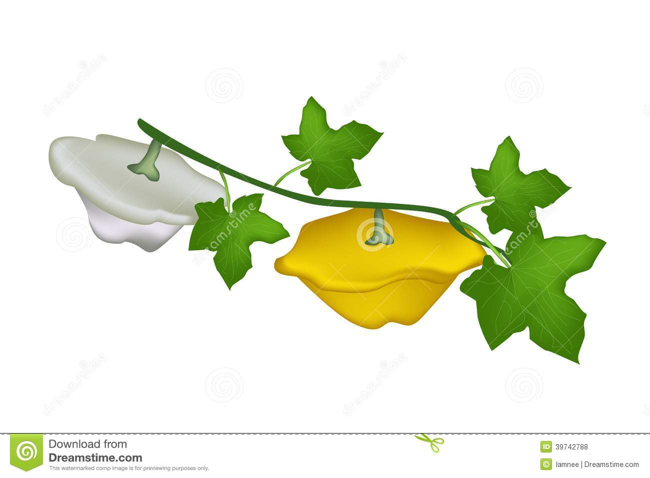two pattypan squash plant on white background stock vector ground clip art no background ground clipart