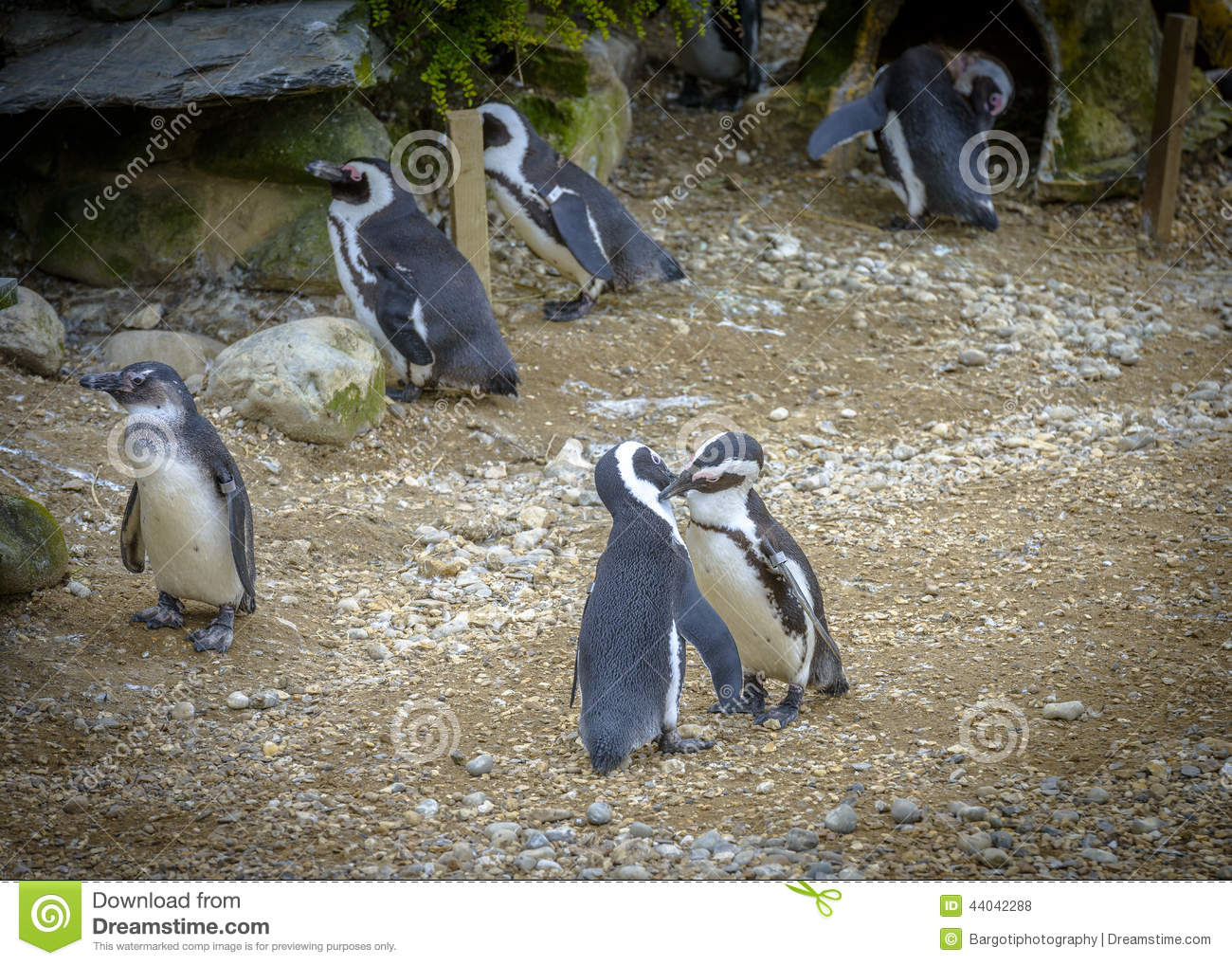 Aninimal Book: Two Penguins In Love And Kissing Stock Photo - Image: 44042288