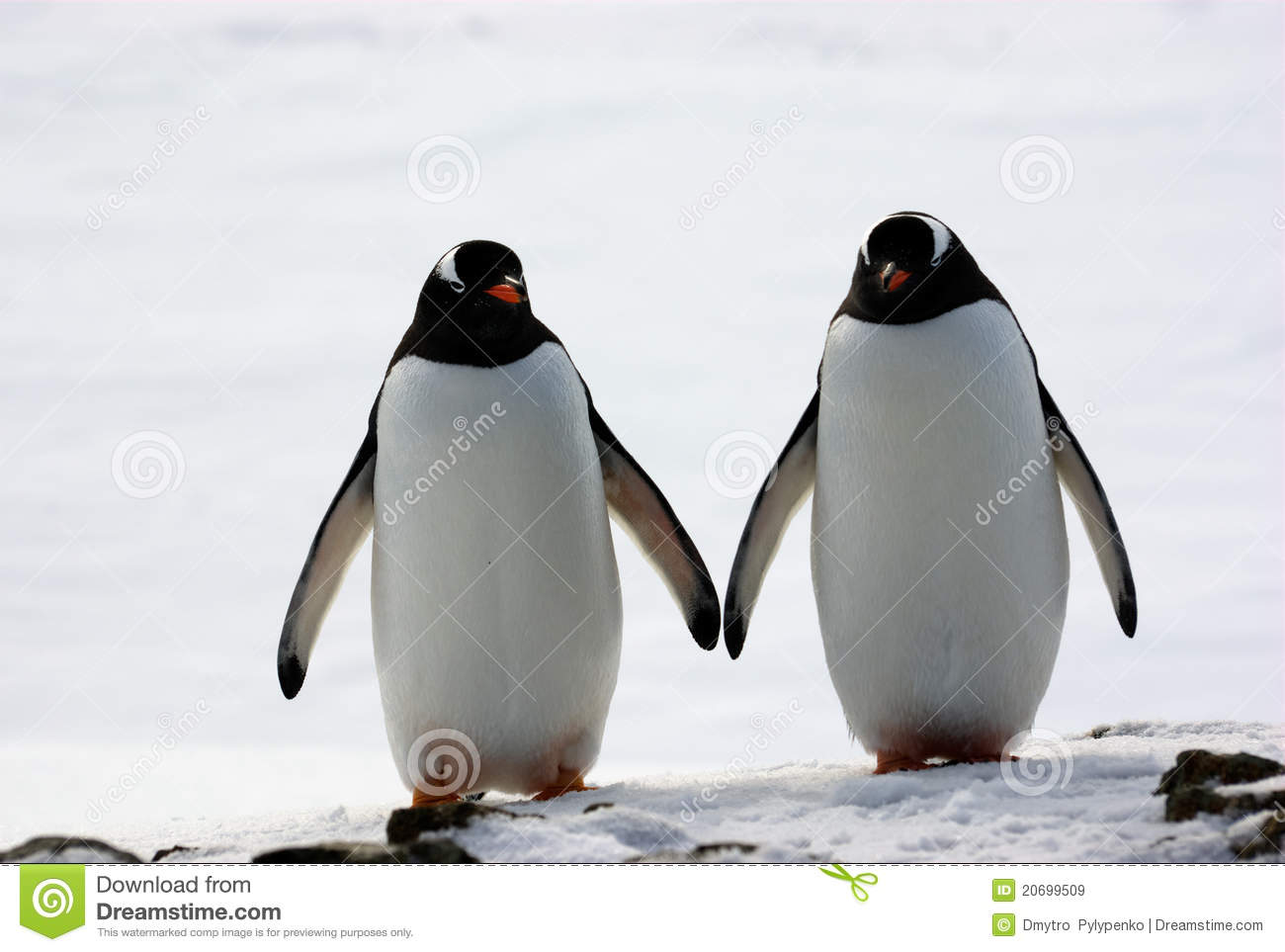 Two Penguins Walk Side By Side Royalty Free Stock Images - Image ...