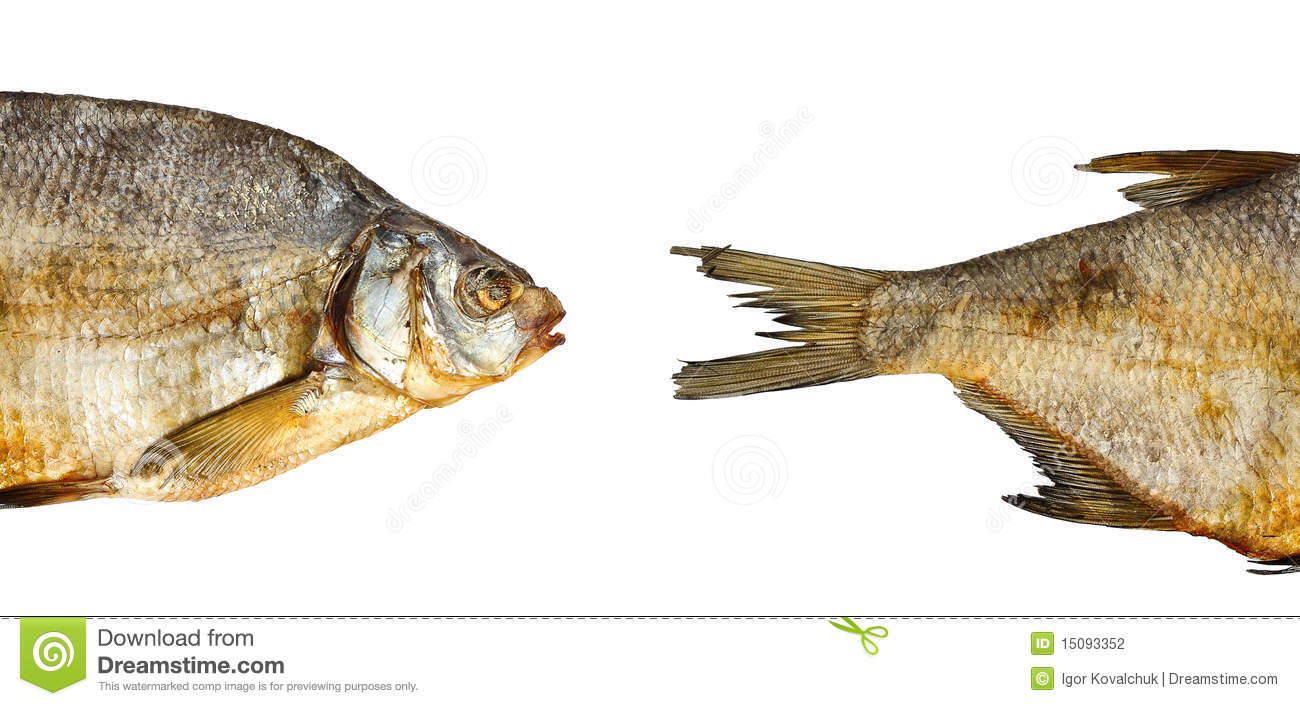 Two pieces of dry fish stock photography image 15093352 for Piece of fish