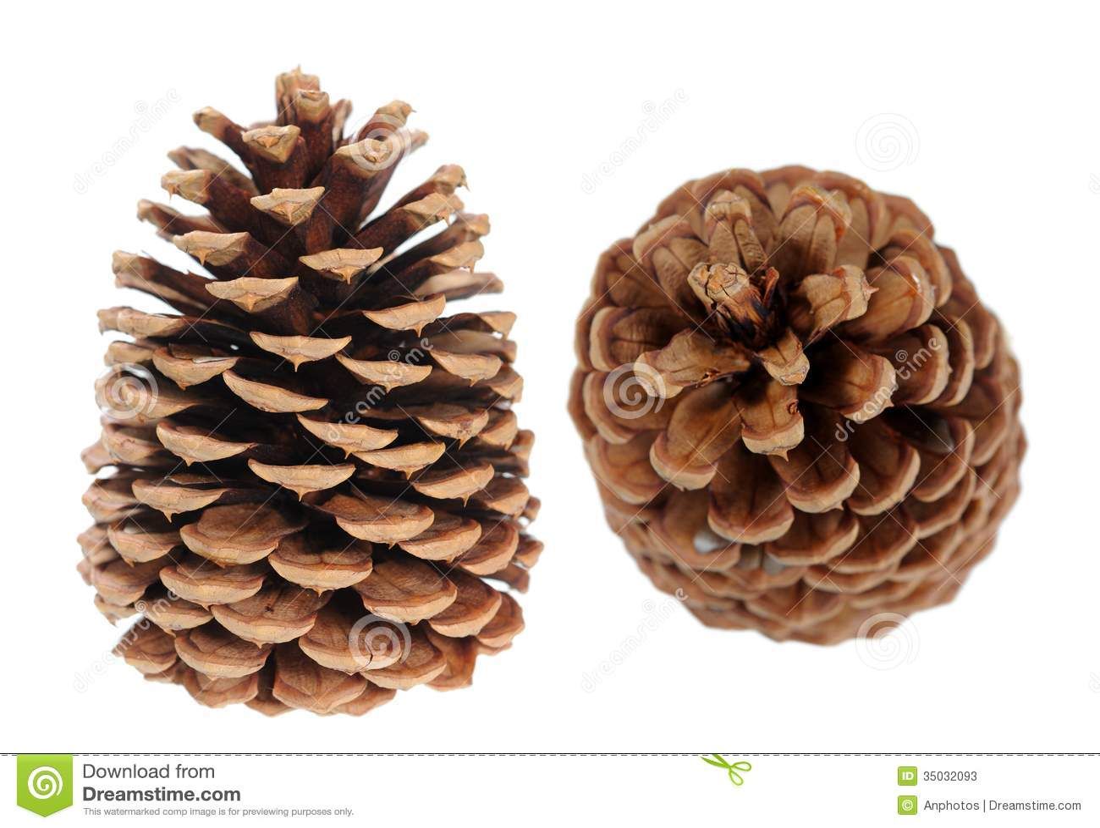 Two Pine Cones Stock Photos - Image: 35032093