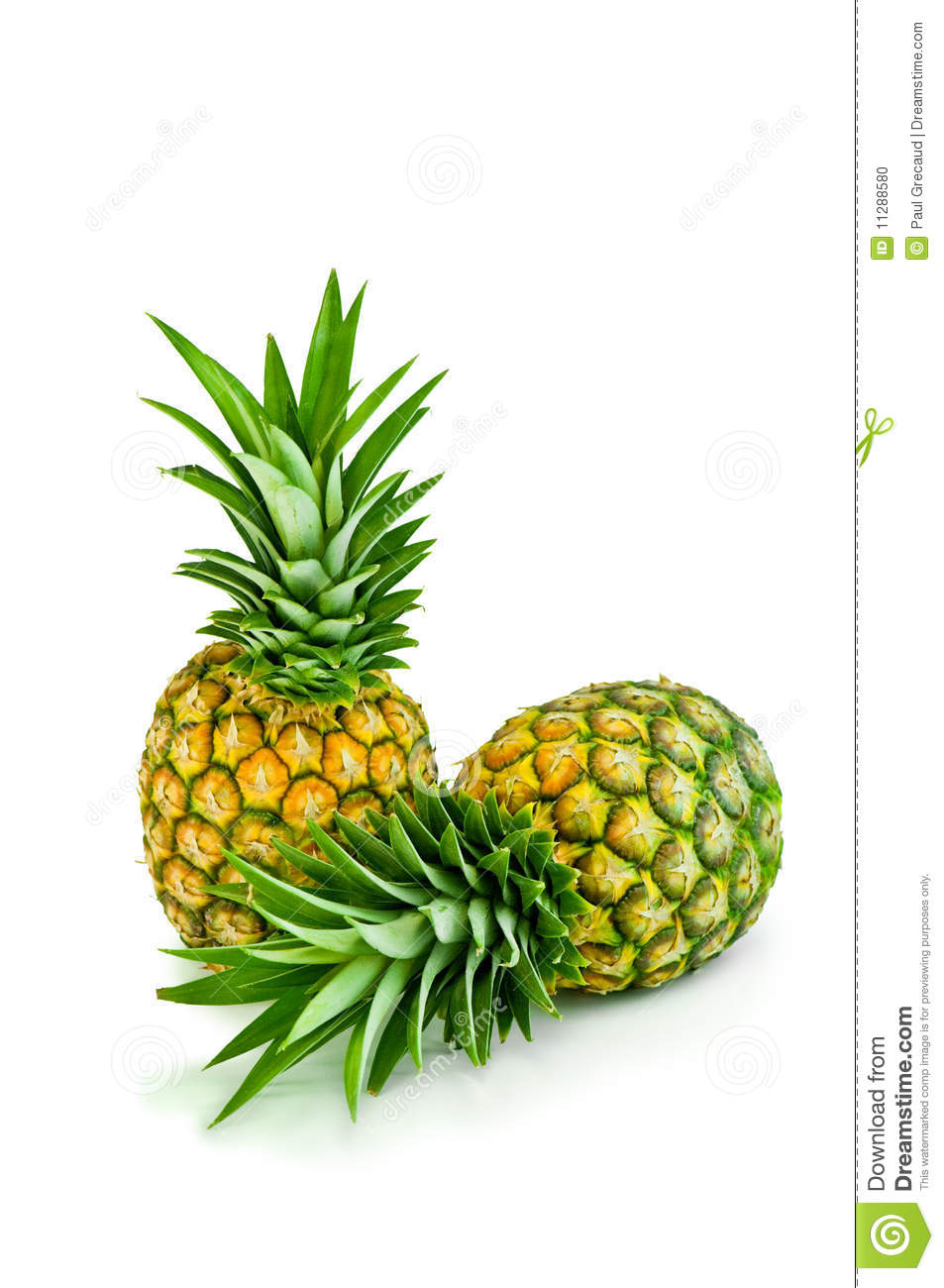 Two pineapples with fresh green leaves isolated on white background.: dreamstime.com/stock-photo-two-pineapples-image11288580