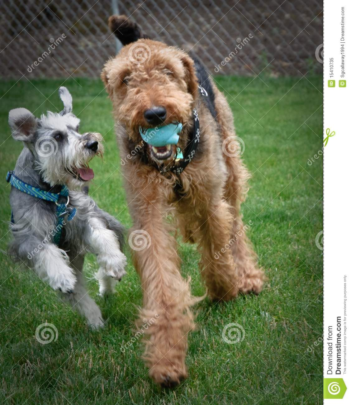 Two playful dogs outdoors