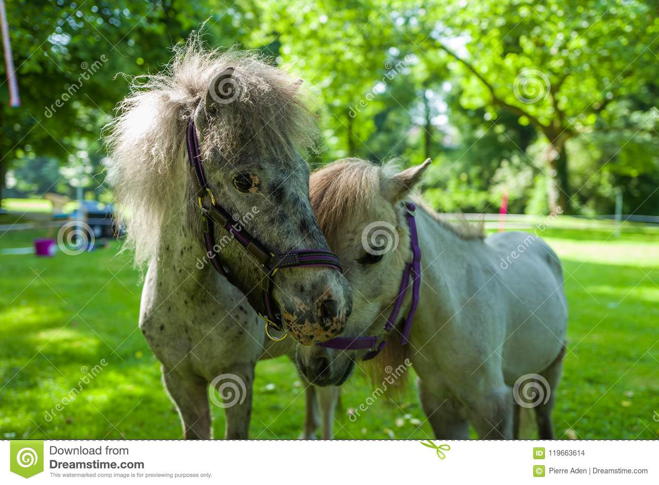 Two ponies on green meadow