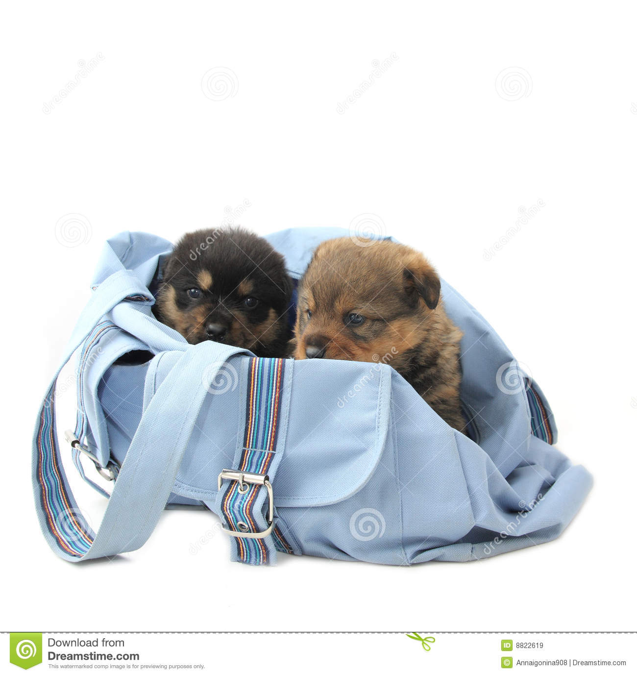 Two Puppies In The Bag Royalty Free Stock Images