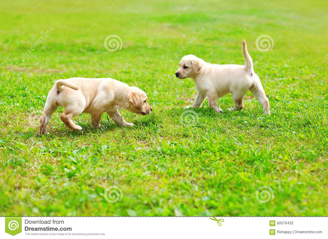 Best Small Playful Dogs