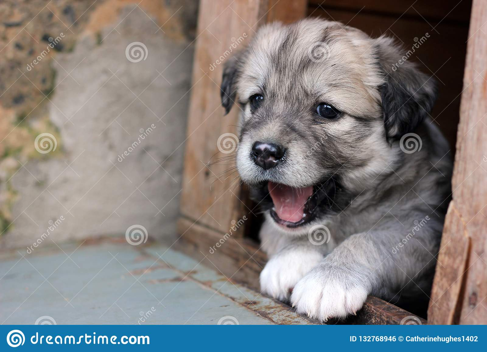 Cute puppy greeting the visitors