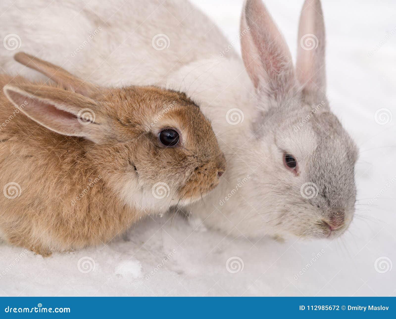 Two rabbits close up