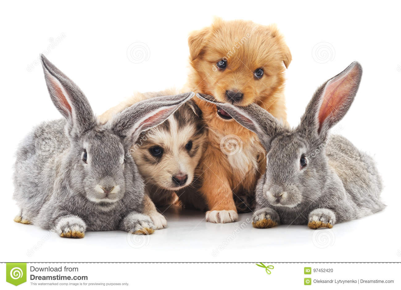 Two rabbits and two puppies.