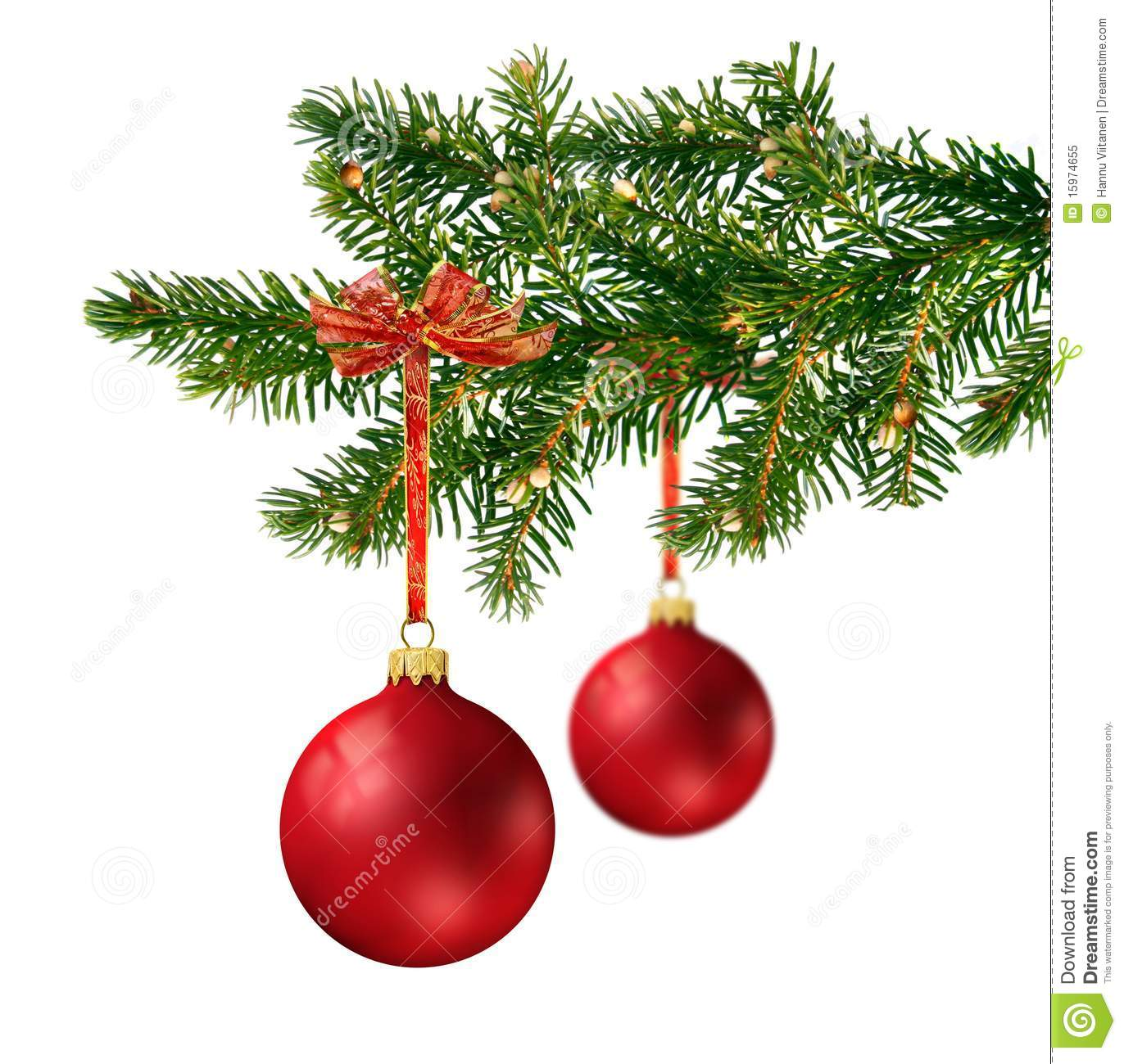 Two red glass balls on christmas tree branch stock image
