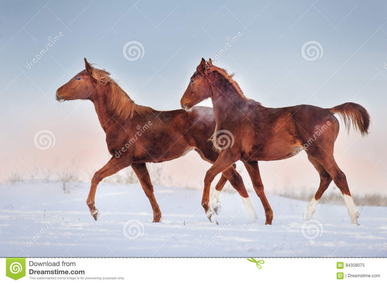 300 Two Red Horse Run Photos Free Royalty Free Stock Photos From Dreamstime