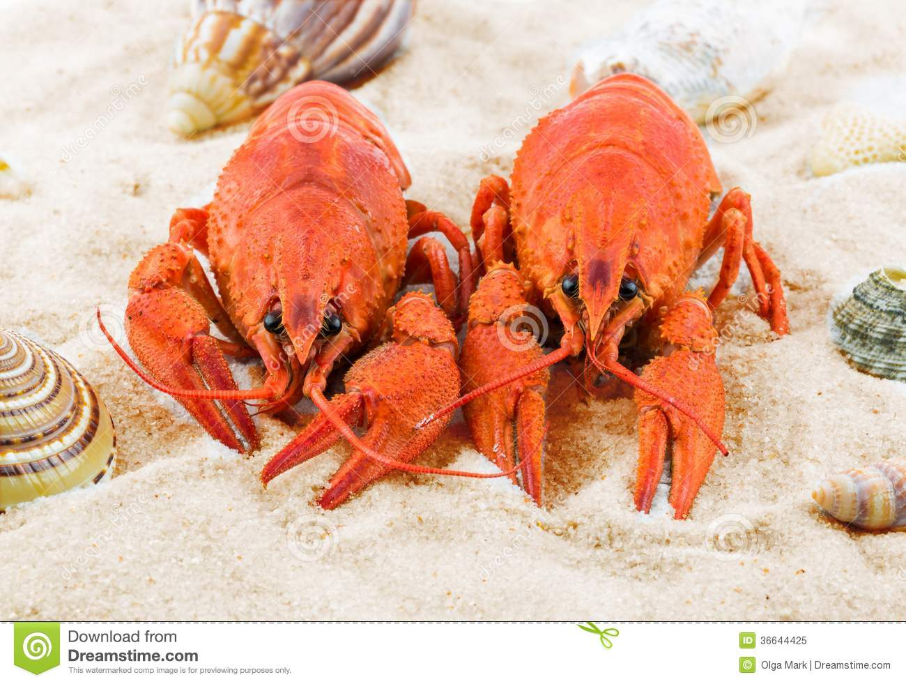 Two Red Lobsters On A Sandy Beach Stock Image - Image of beer, bake: 36644425