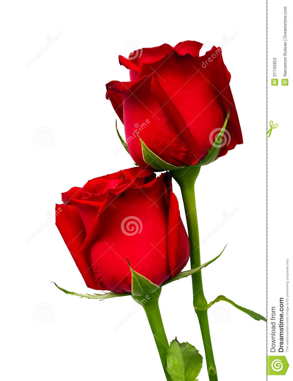 flower vase sign with Stock Photos Two Red Rose Isolated White Background Image31745953 on Name 3Dpink Rose 7D likewise Fortnite Account All Season 2 Skins Mako Glider 46083864 additionally Watch as well Watch likewise Gerbera Daisies.