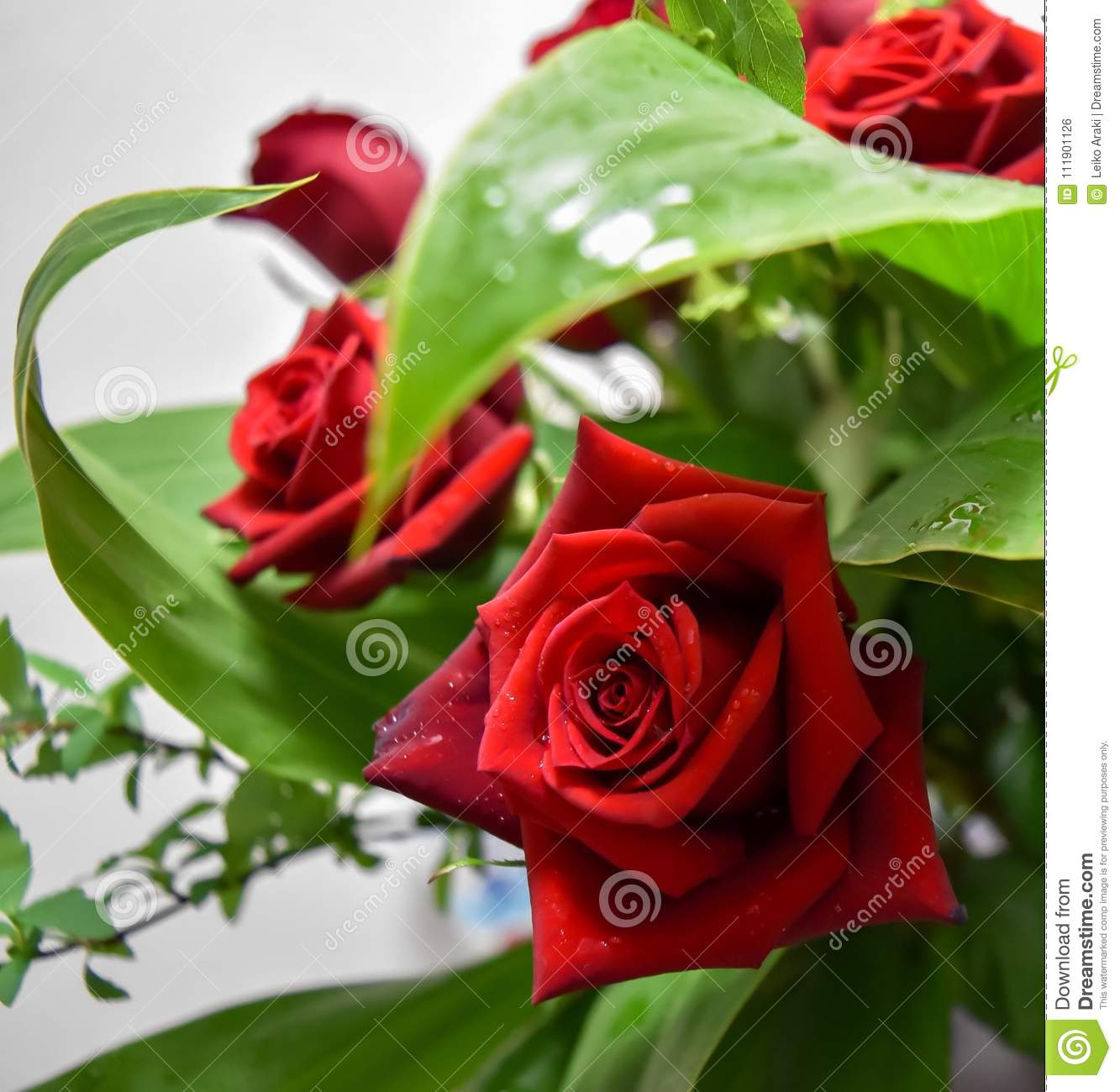 Two Roses Red Decoration Flowers Bouquet Stock Photo Image Of Gift