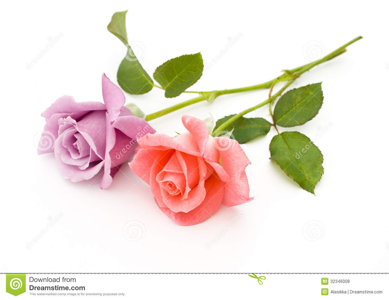 Two Roses Are On A White Background Stock Photo Image 32346008