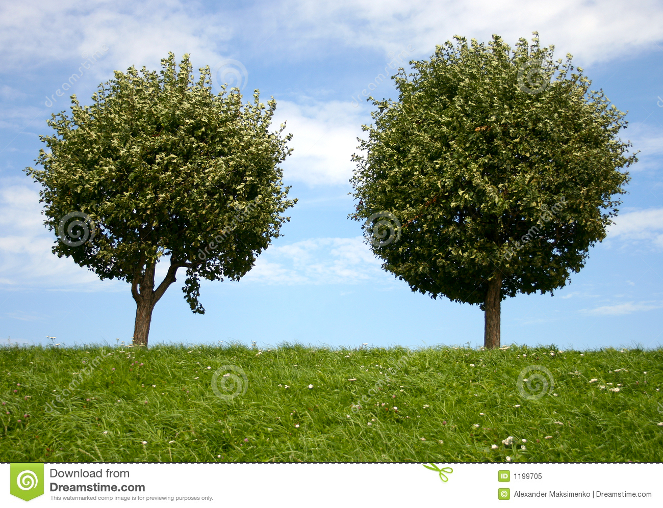 Two Round Trees Royalty Free Stock Photo Image 1199705