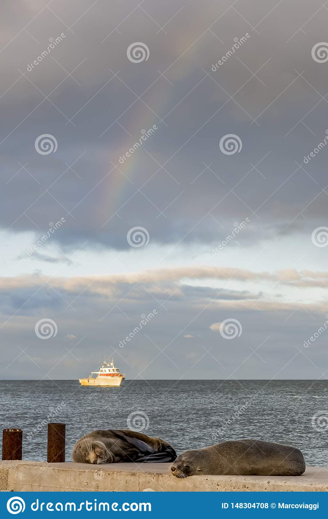 Two sea lions rest on the beach with a fishing boat in the background and the rainbow in the sky, Kingscote, Australia
