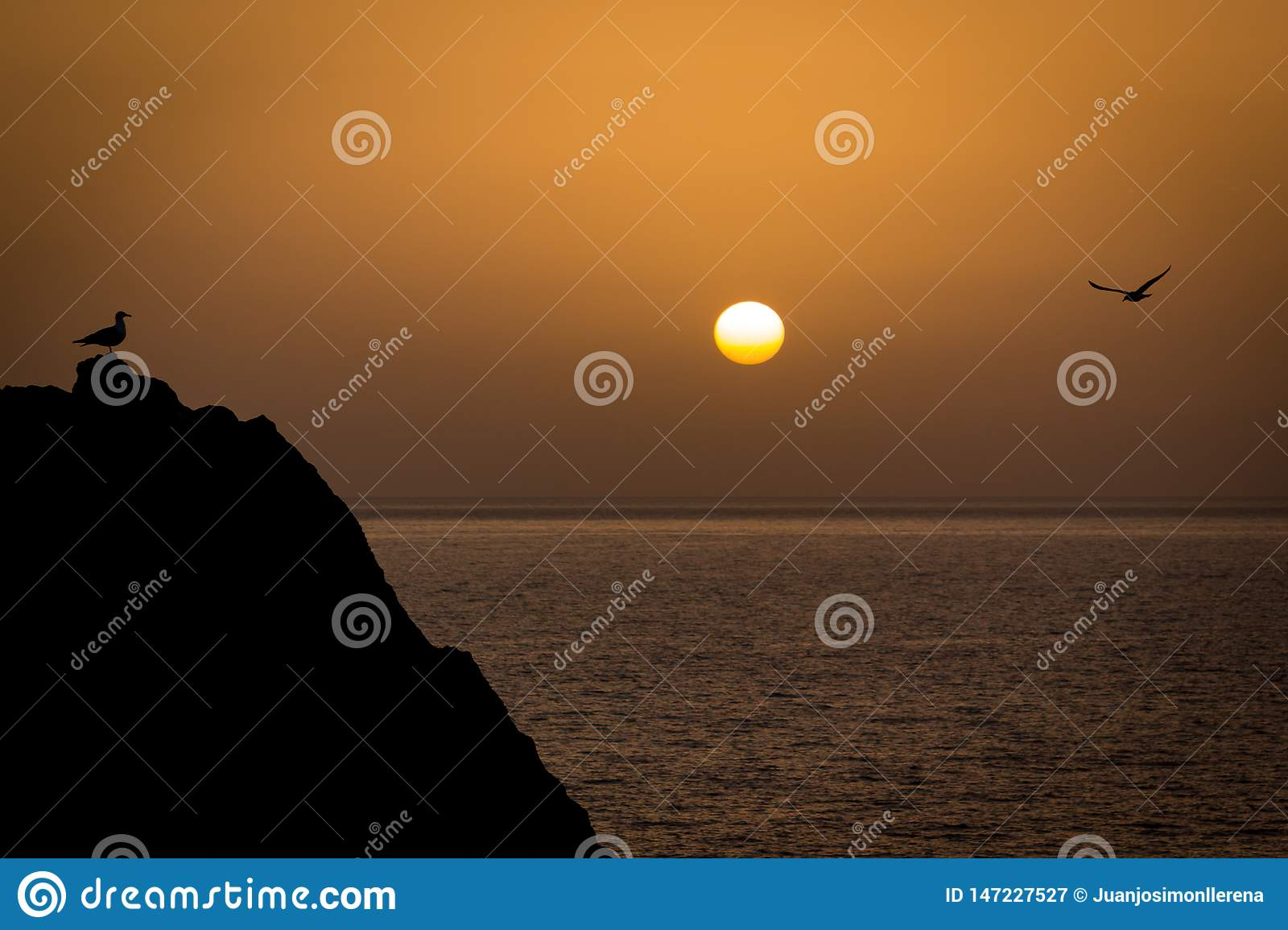 Two seagulls meeting in a rock in front of the sea while the sun is setting at the horizon. Peace, relax, chill