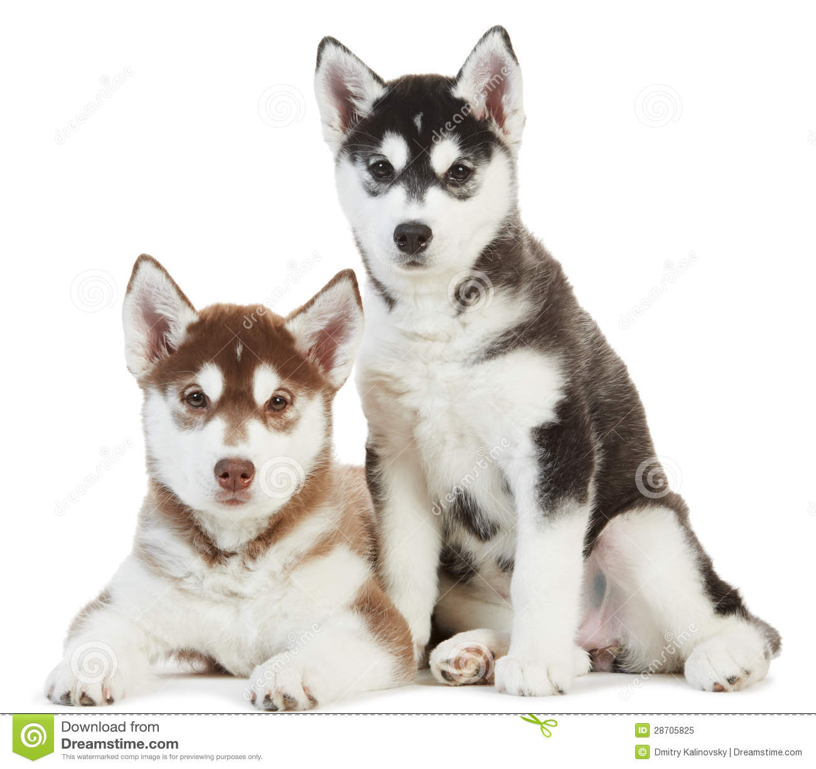 Husky Dog Names With Blue Eyes