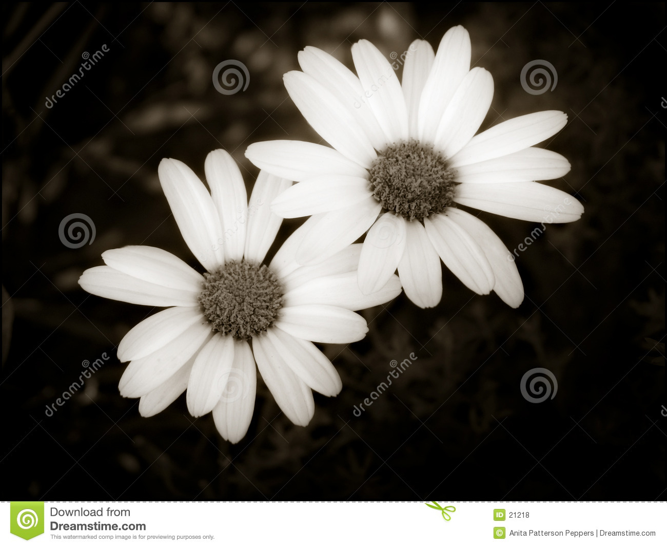 Two simple daisies