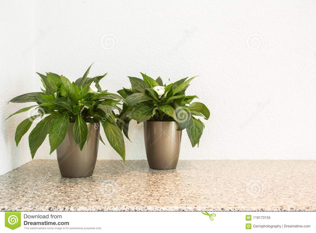 Two Small Green Plants In Flower Pots For Interior