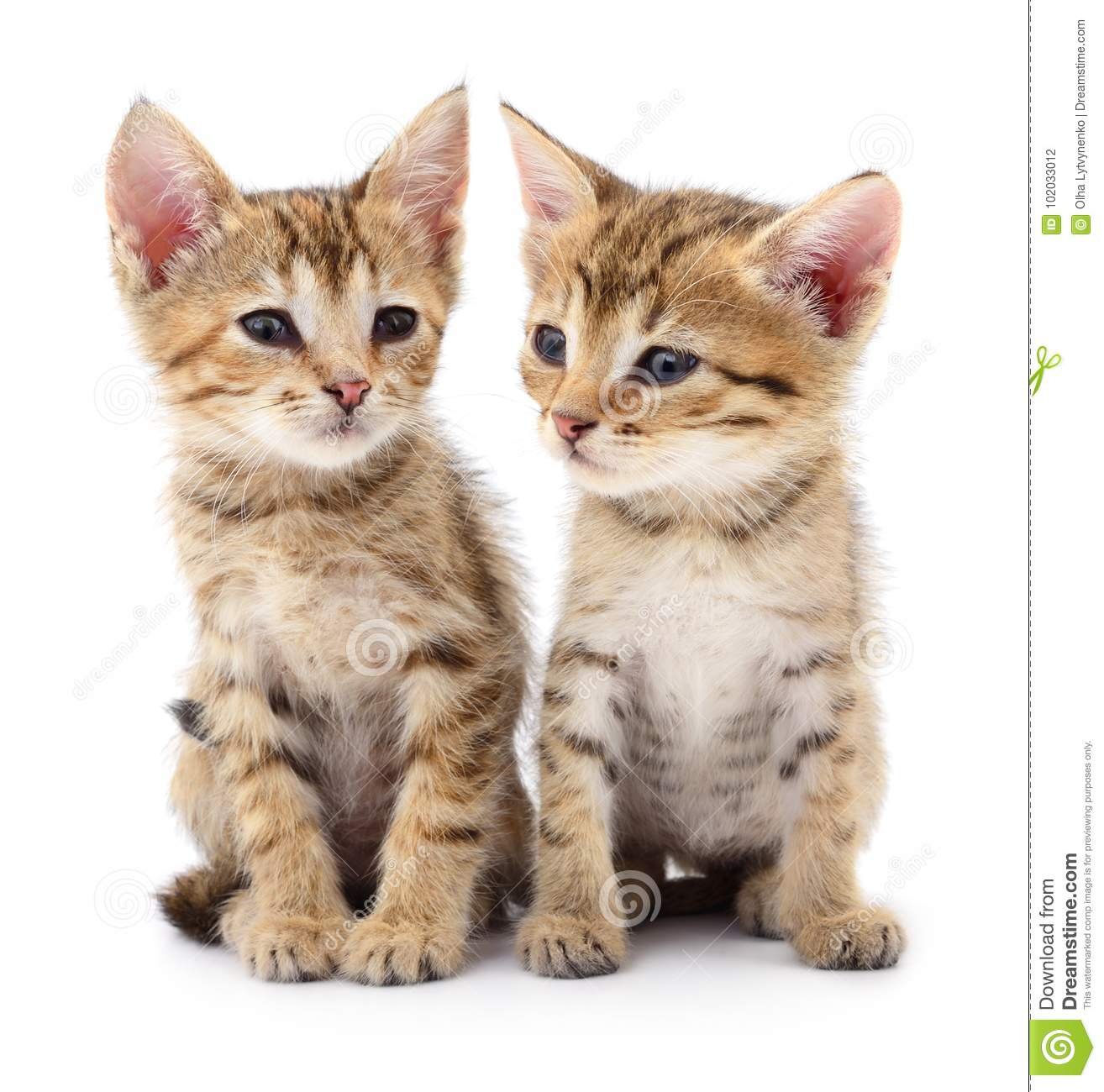 Download Two small kittens. stock photo. Image of striped, small - 102033012