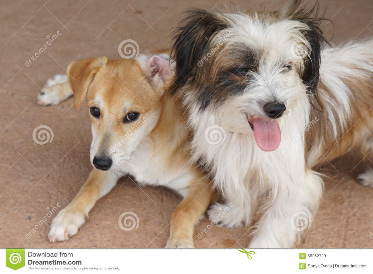 Two Small Mixed Breed Puppies Sitting Together Stock Image